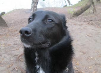 Передержка собак в Москве