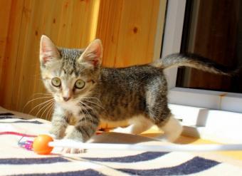 Котята малыши в добрые руки image 3