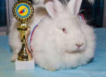 мама крольчат