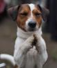 Инструктор по вязке собак всех пород.Развязывание.8-925-6061551.